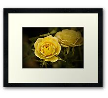 Yellow Roses - textured Framed Print