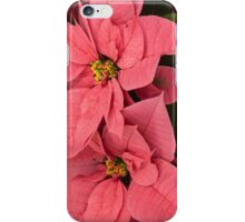 Christmas Greetings with a Vivacious Pink Poinsettia - a Vertical View iPhone Case/Skin