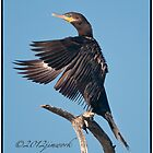Neotropic Cormorant Yoga by JimWork