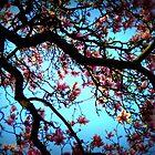 La Magnolia by Angela Bruno