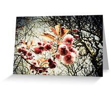 Retro effect cherry tree blossom Greeting Card