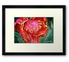 Flamenco Tulip Framed Print