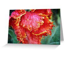 Flamenco Tulip Greeting Card