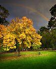 Coburg Lake Reserve by Darren Stones