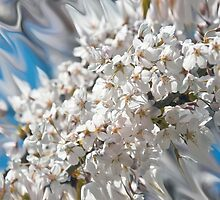Blossom Splash by Al Duke