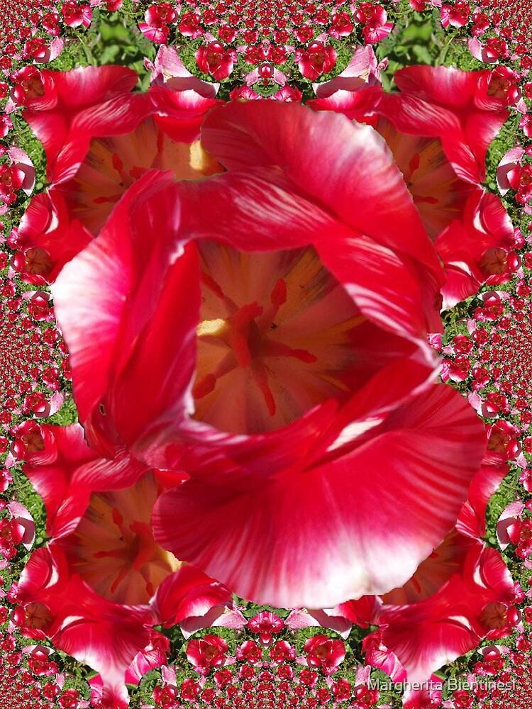 Red tulip by Margherita Bientinesi