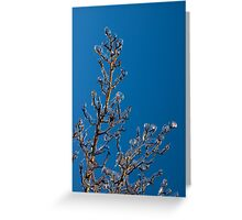 Mother Nature's Christmas Decorations - Ice Jewelry Greeting Card