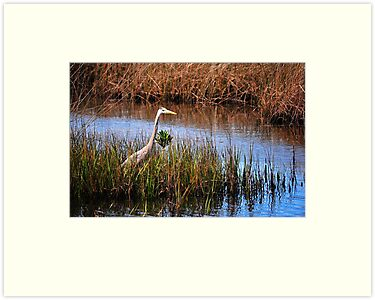 Great Blue Heron by joevoz