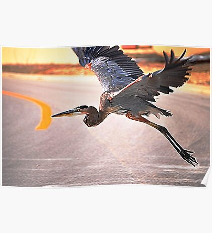 Blue Heron Takes Flight Poster