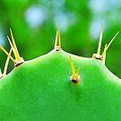 Cactus by joevoz