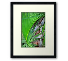 Palm Frond Framed Print