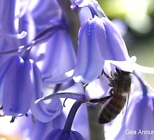 Bee in Bluebell 21 by Gea Austen
