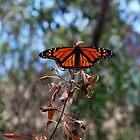Monarch Butterfly by MargaretMyers