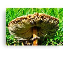 Under the Mushroom Cap Canvas Print