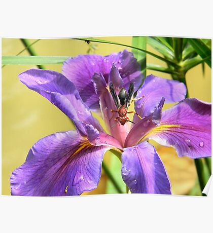 Artistic Purple Iris and Wasp Poster