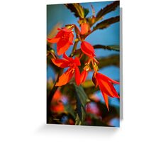 Begonia Flowers Greeting Card