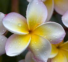 happy earth day!!!!!!! by Iris Mackenzie