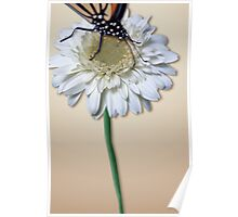 Monarch on a White Daisy Poster
