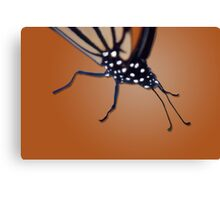 Butterfly close-up Canvas Print