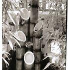 Bamboo Fountain by mczahar
