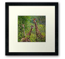 Journey of Giraffe Framed Print