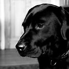 Lola; The Black Labrador by Mark Battista