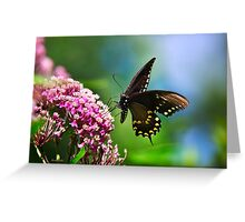 Colorful Spicebush Swallowtail Butterfly Art Greeting Card