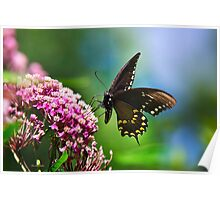 Colorful Spicebush Swallowtail Butterfly Art Poster