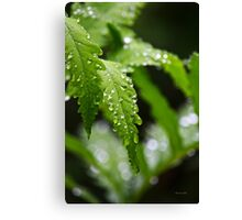 Drenched Fern Art Leaves Canvas Print