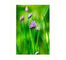 Purple Chive Art Print