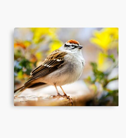 Spring Sparrow Canvas Print