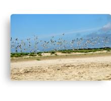 Seagulls on the beach of Skagen Canvas Print