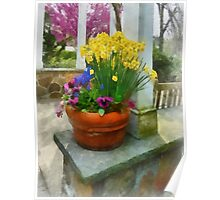 Daffodils and Pansies in Flowerpot Poster