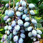 Clustered Berries by Fara