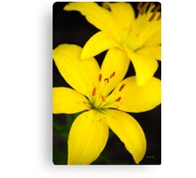 Yellow Lily Flower Art Canvas Print