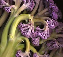 Purple Cauliflower by Barbara Wyeth