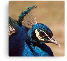 Indian Peacock Headshot  Canvas Print