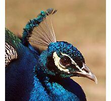 Indian Peacock Headshot  Photographic Print