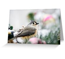 Titmouse Bird Portrait Greeting Card