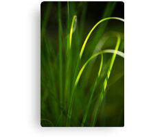 Sun Kissed Grass Abstract Canvas Print