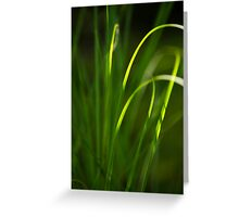Sun Kissed Grass Abstract Greeting Card