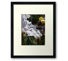 Lavender Icicle Iris Framed Print