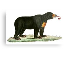 Brown Bear with long curly tongue Vintage Illustration Metal Print