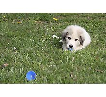 Goliath Loves Easter Egg Hunting Photographic Print