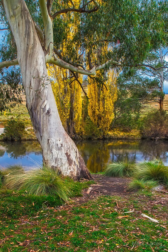 The River Gum by Mark  Lucey