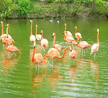 Flock of Flamingos by figuresk8rgirl