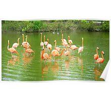 Flock of Flamingos Poster