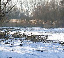 Snowy Winter Danube Backwater Landscape by Inimma