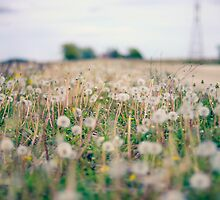Field of Dreams by laruecherie
