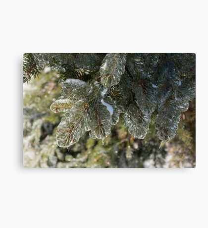 Mother Nature Christmas Decorations - Pine Branches Canvas Print